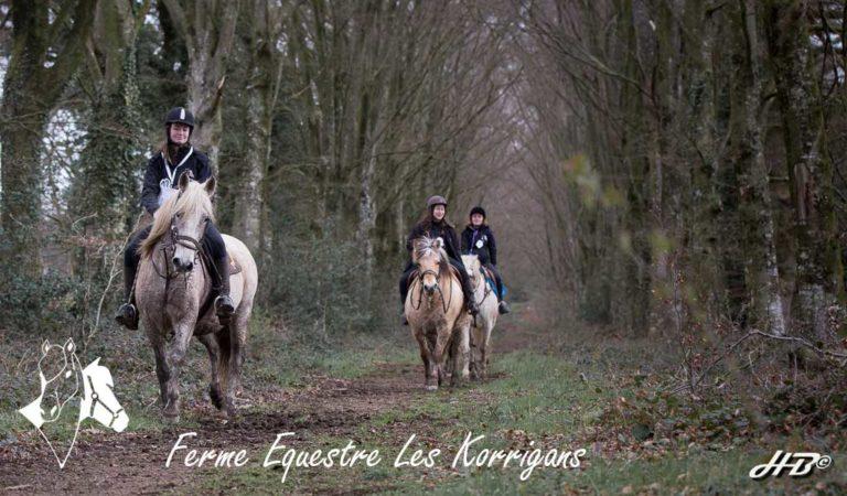 cavaliers en forêt