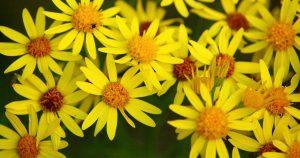 Formation Plantes toxiques