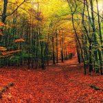 Randonnées et balades de l'automne